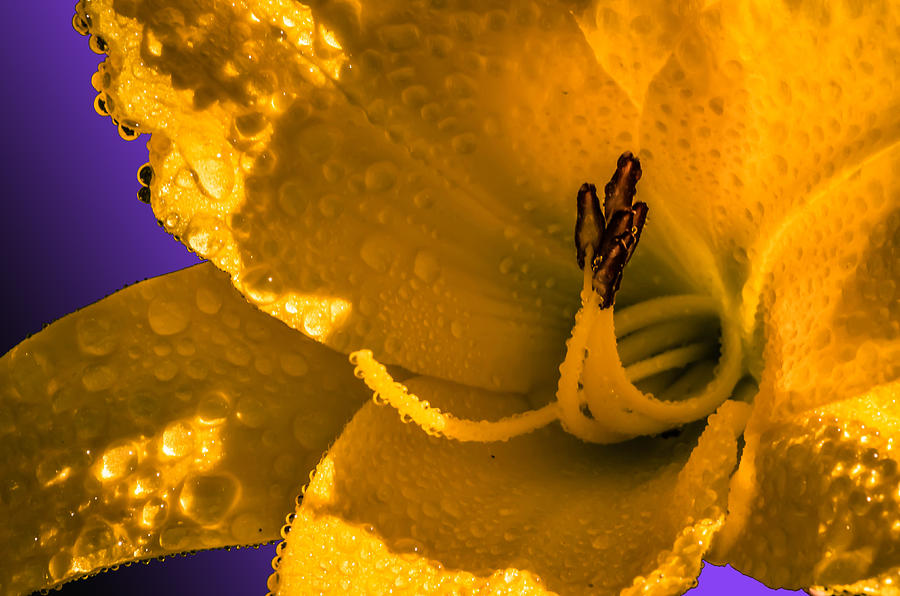 Anniversary Photograph - Mellow Yellow by Brian Stevens