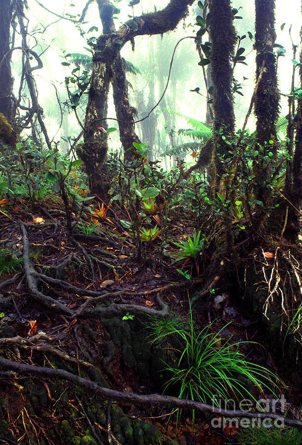 Puerto Rico Photograph - Misty Rainforest El Yunque by Thomas R Fletcher