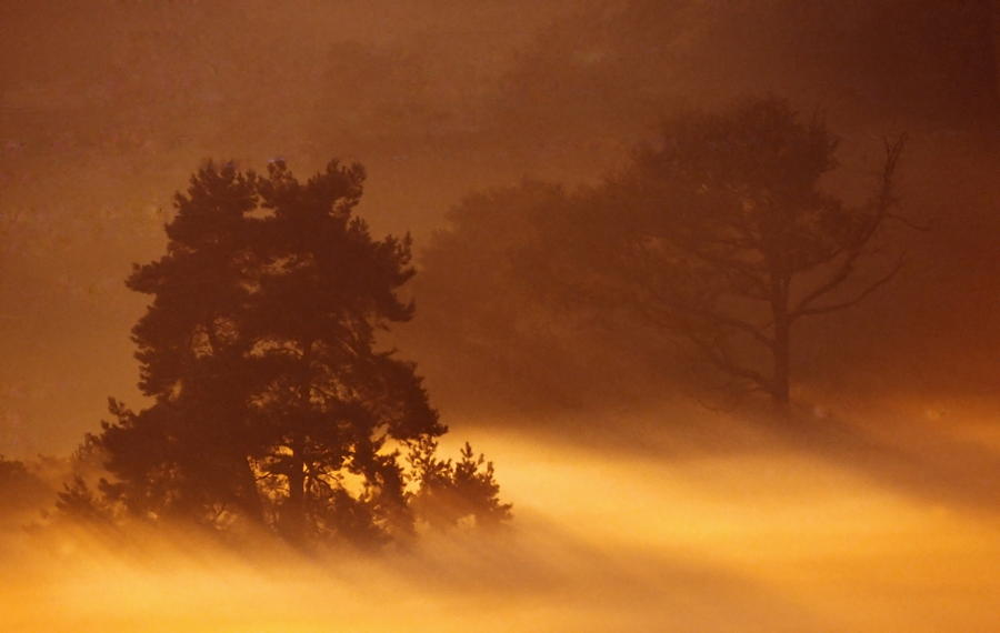 Heath Photograph - Moorland In The Morning Mist Netherlands by Ronald Jansen