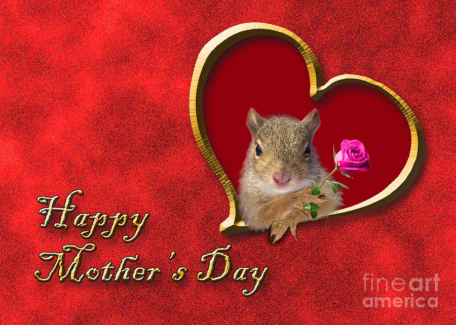 Holiday Photograph - Mothers Day Squirrel by Jeanette K