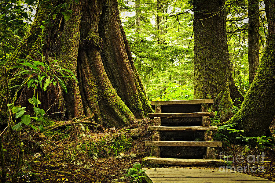 Rainforest Photograph - Path In Temperate Rainforest by Elena Elisseeva