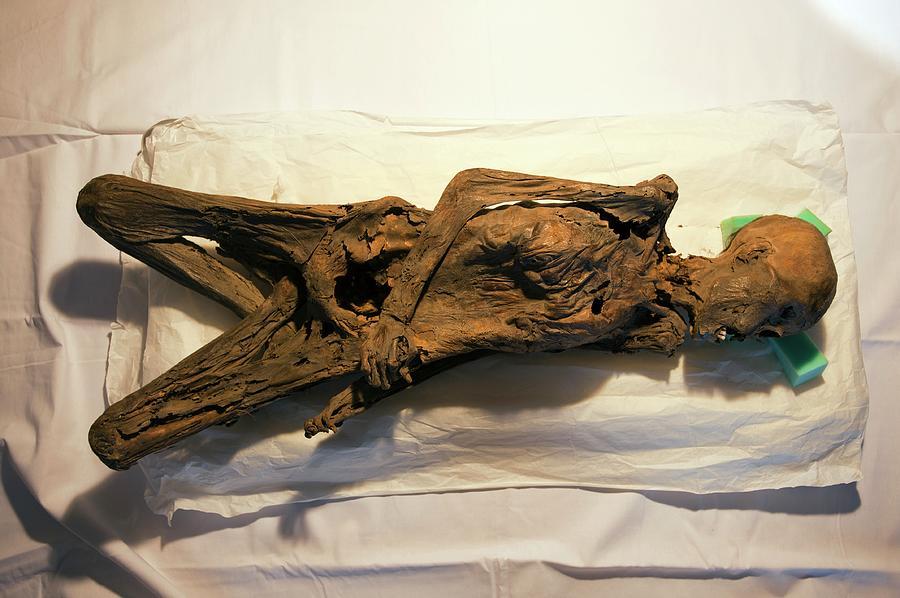 Mummy Photograph - Peruvian Mummy by Marco Ansaloni / Science Photo Library