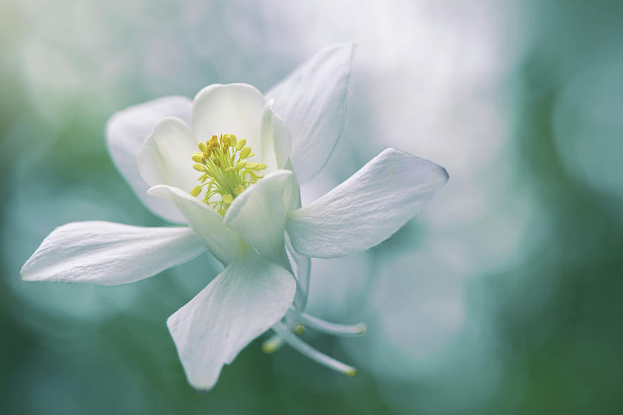 Green Photograph - Purity by Jacky Parker