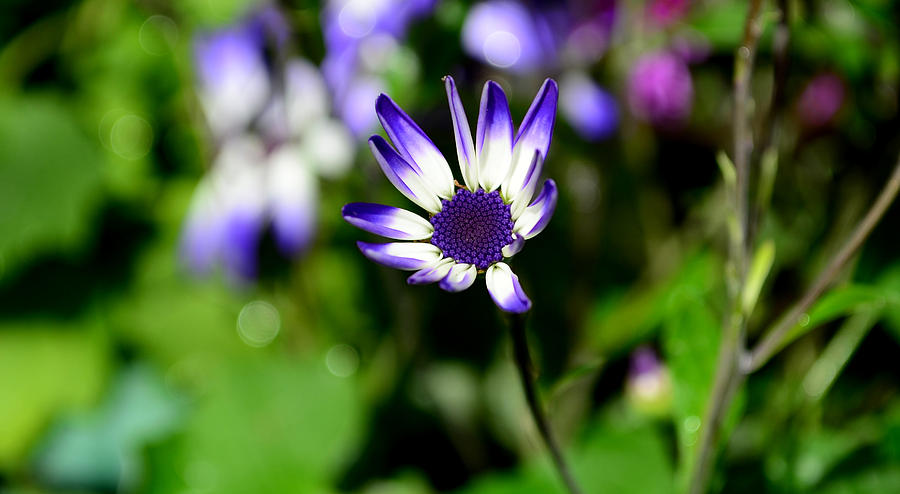 Flower Photograph - Purple Flower by Barbara Walsh