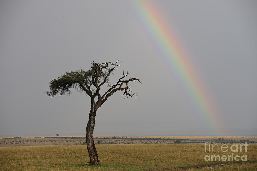 Africa Photograph - Rainbow by John Shaw