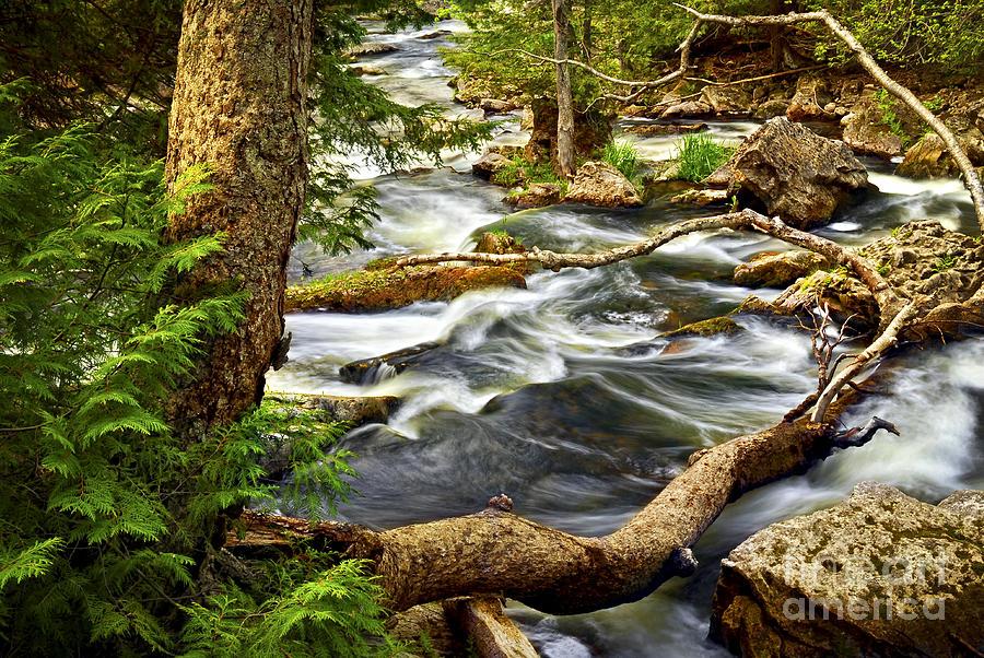 Water Photograph - River Rapids by Elena Elisseeva