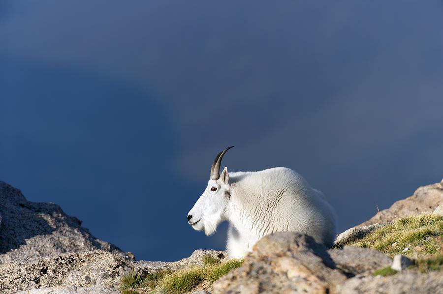 Rocky Photograph - Rocky Mountain Goat by Gary Langley
