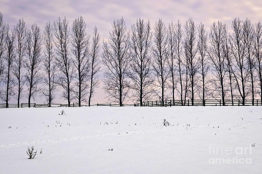 Landscape Photograph - Rural Winter Landscape by Elena Elisseeva