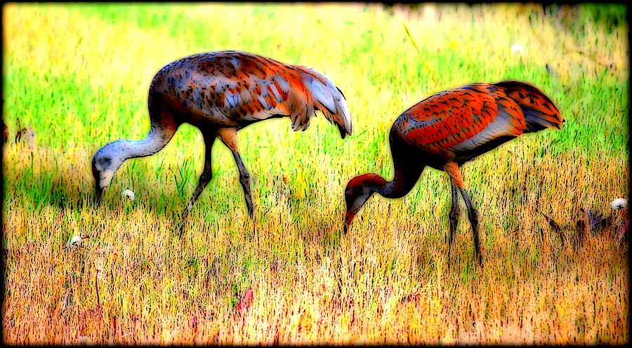 Bird Photograph - Sandhill Cranes by Kathy Sampson