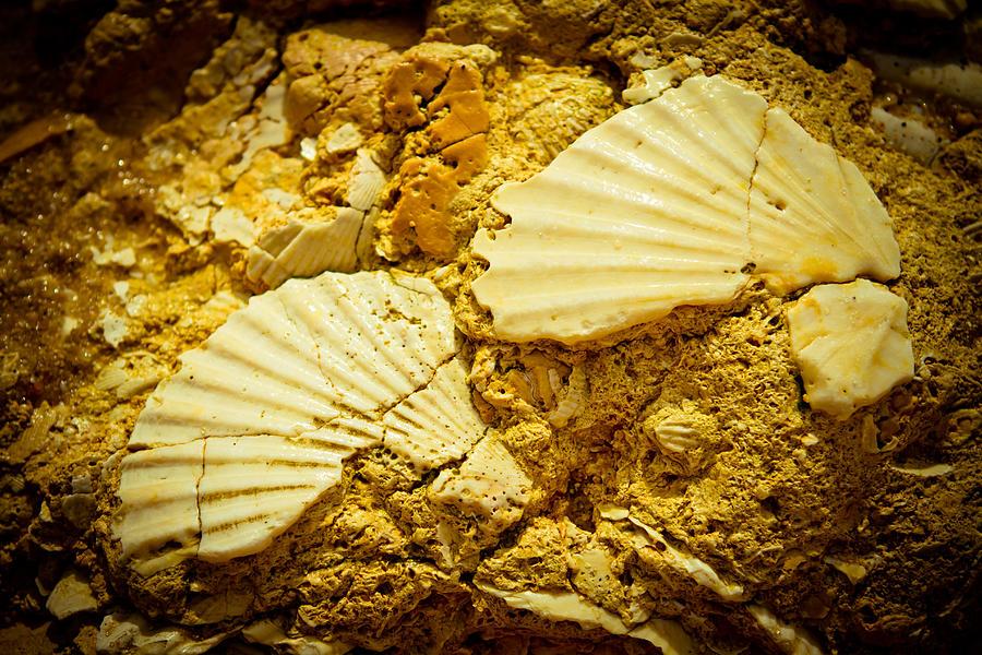 Outdoor Photograph - Seashell In Stone by Raimond Klavins