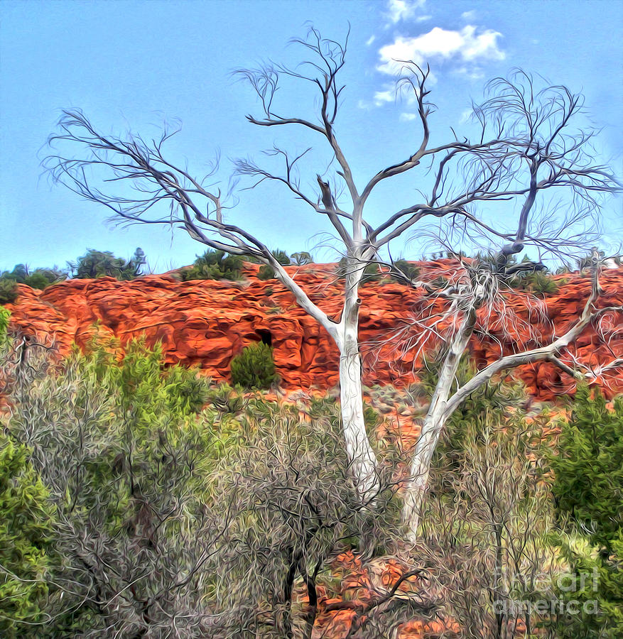Sedona Arizona Dead Tree Photograph by Gregory Dyer