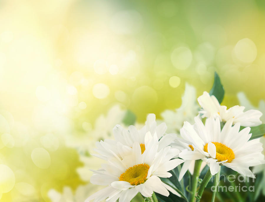Photograph - Spring Background by Mythja  Photography