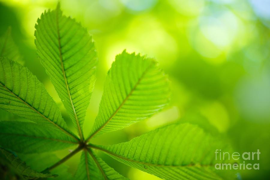 Spring Green Photograph