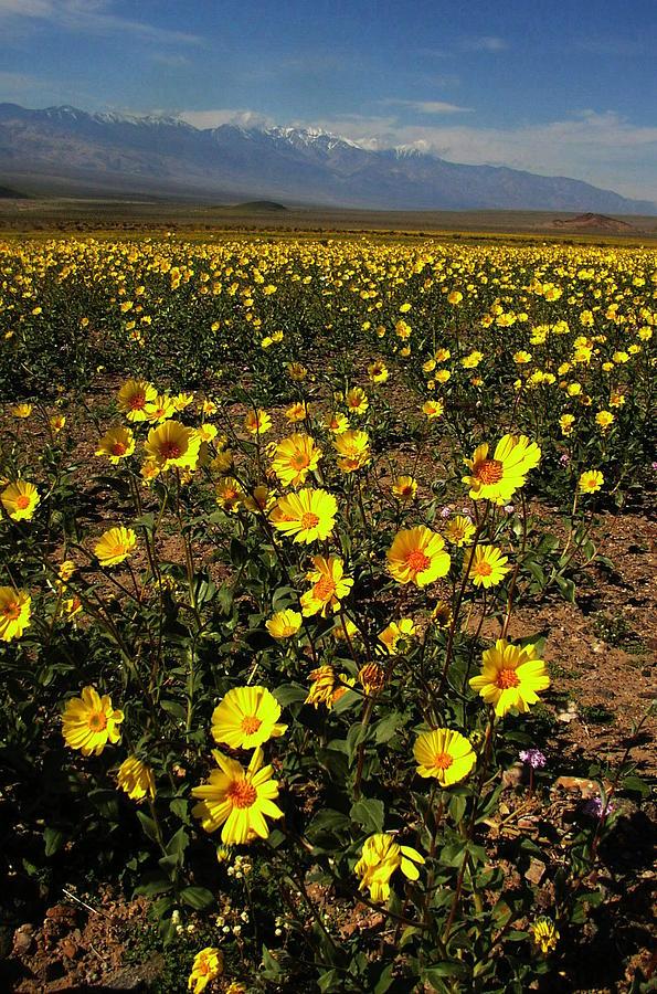 Desert Photograph - Spring by Jenny Fish