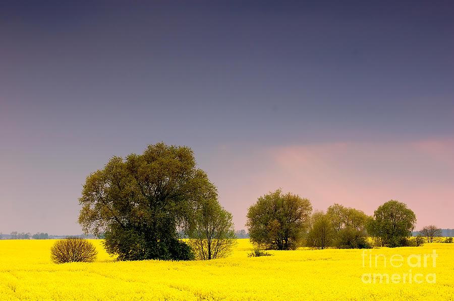 Agricultural Photograph - Spring Landscape by Michal Bednarek