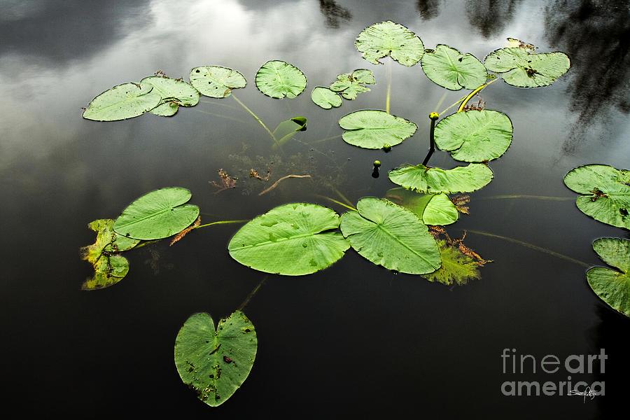 Lilly Pads Photograph - Stillness by Scott Pellegrin