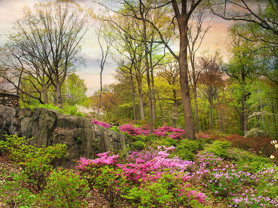 Garden Photograph - The Azalea Garden by Jessica Jenney