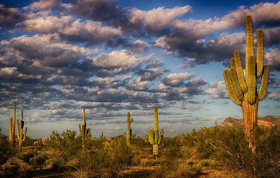Sunrise Photograph - The Desert Golden Hour  by Saija  Lehtonen
