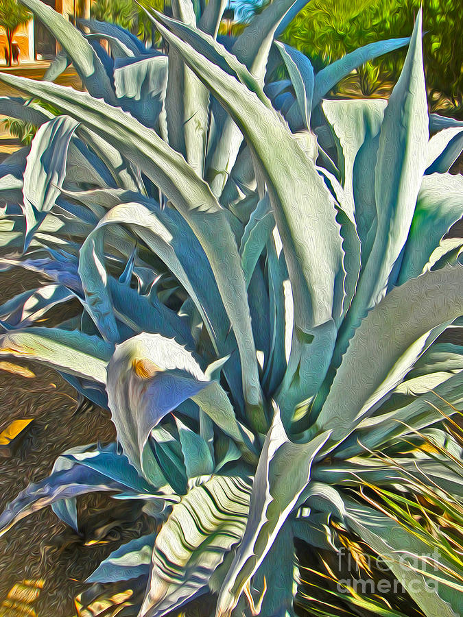 Tucson Photograph - Tucson Arizona Cactus by Gregory Dyer