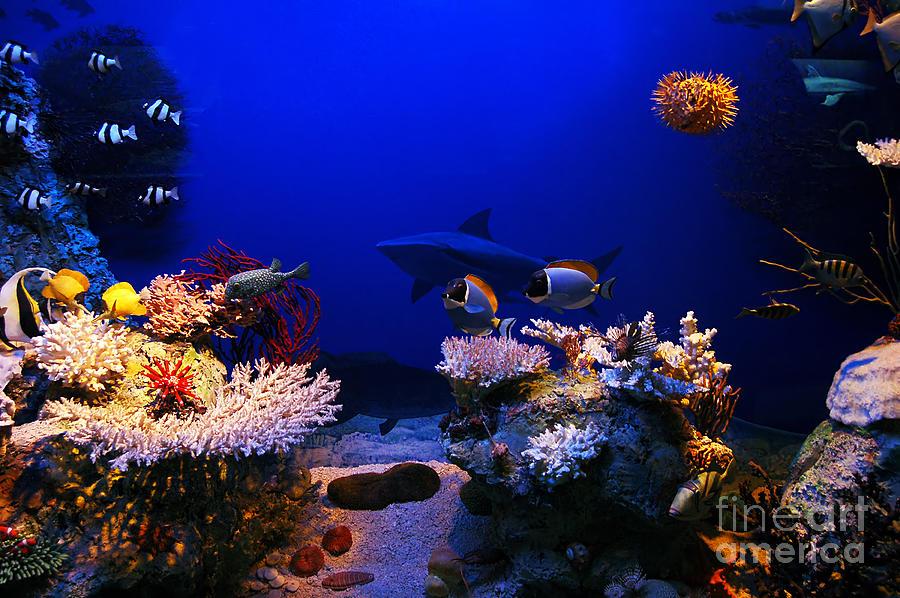 Underwater Photograph - Underwater Scene by Michal Bednarek