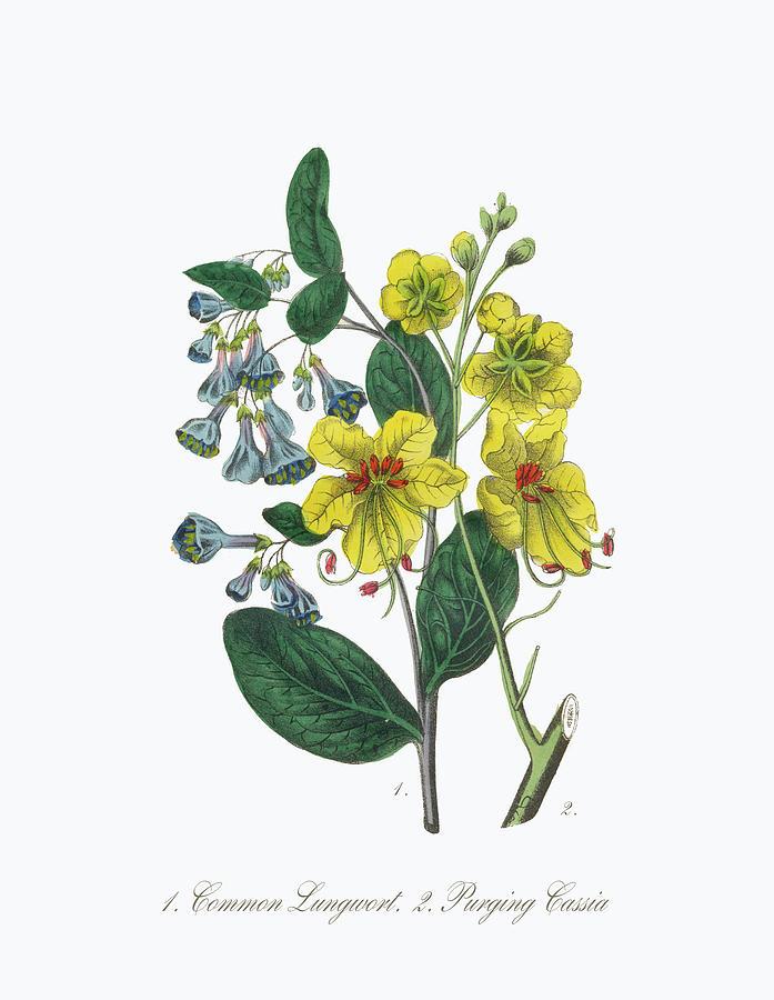 Victorian Botanical Illustration Of Digital Art by Bauhaus1000