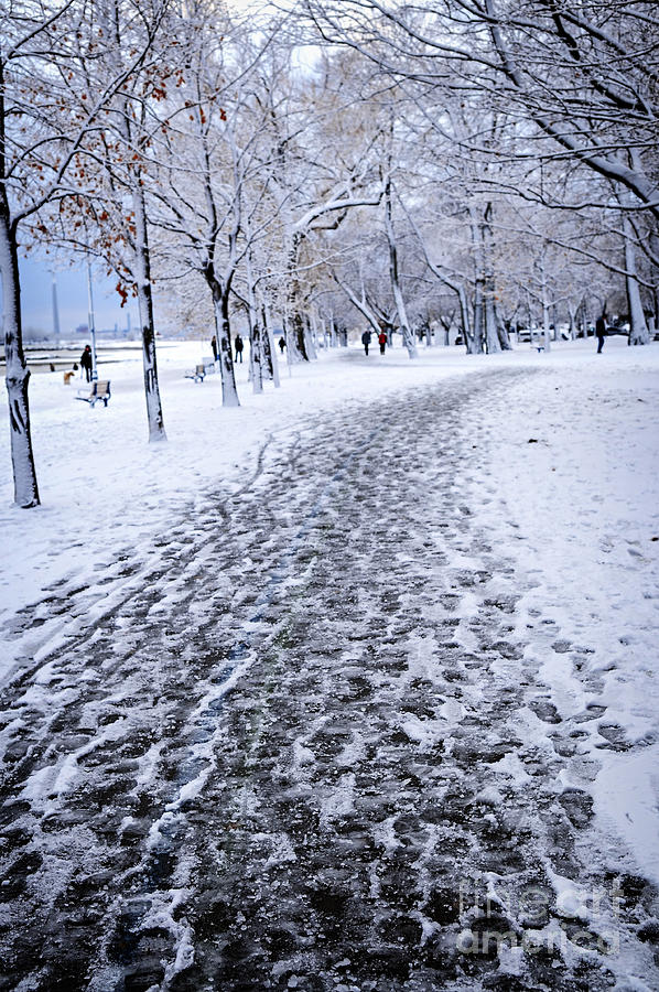 Winter Photograph - Winter Park by Elena Elisseeva