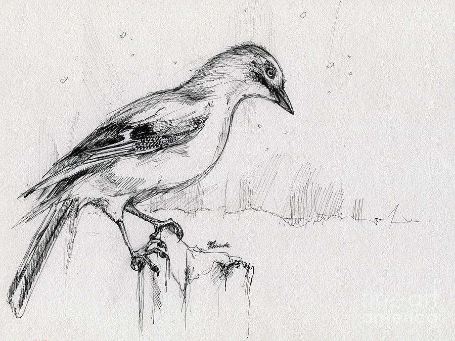 Jay Drawing - Wintery Tales by Angel Ciesniarska