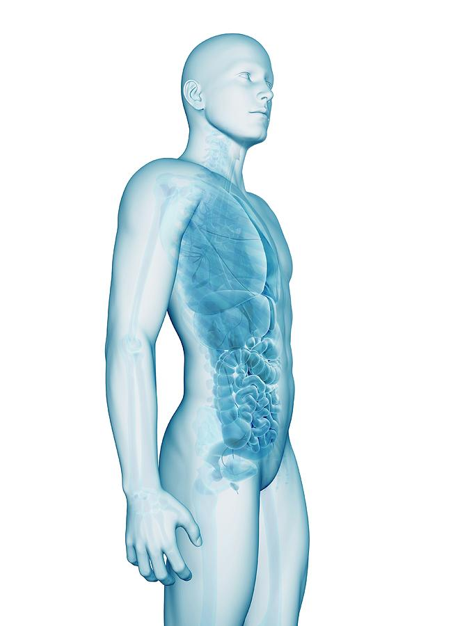 Artwork Photograph - Human Anatomy by Sebastian Kaulitzki