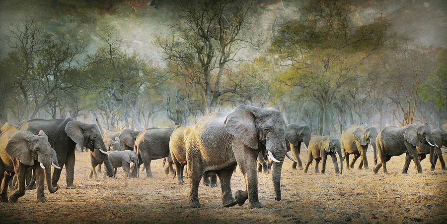 Wildlife Photograph - Untitled by Antonio Grambone