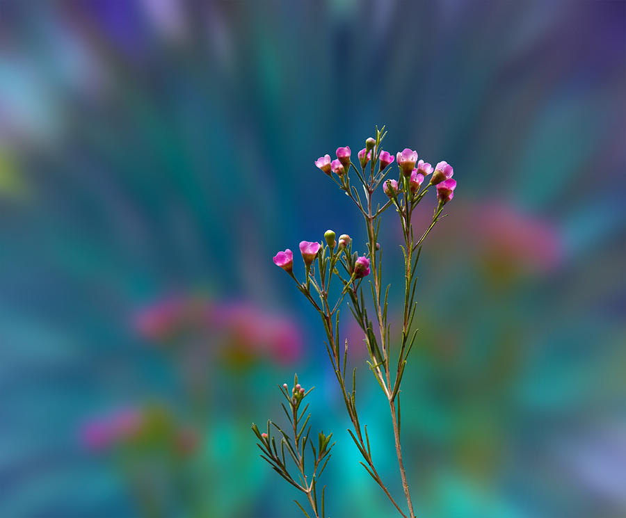 Flowers Photograph - 3398 by Peter Holme III