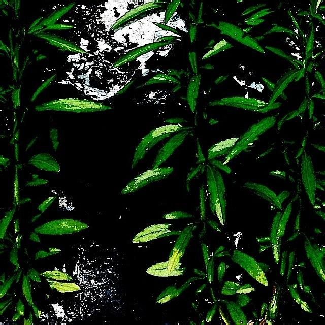 Beautiful Photograph - Foliage  by J Roustie