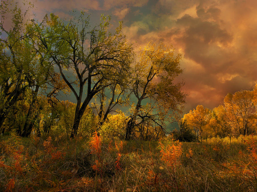 Trees Photograph - 3415 by Peter Holme III