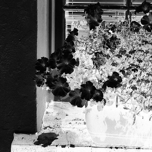 Beautiful Photograph - Flowers In Negative by J Love