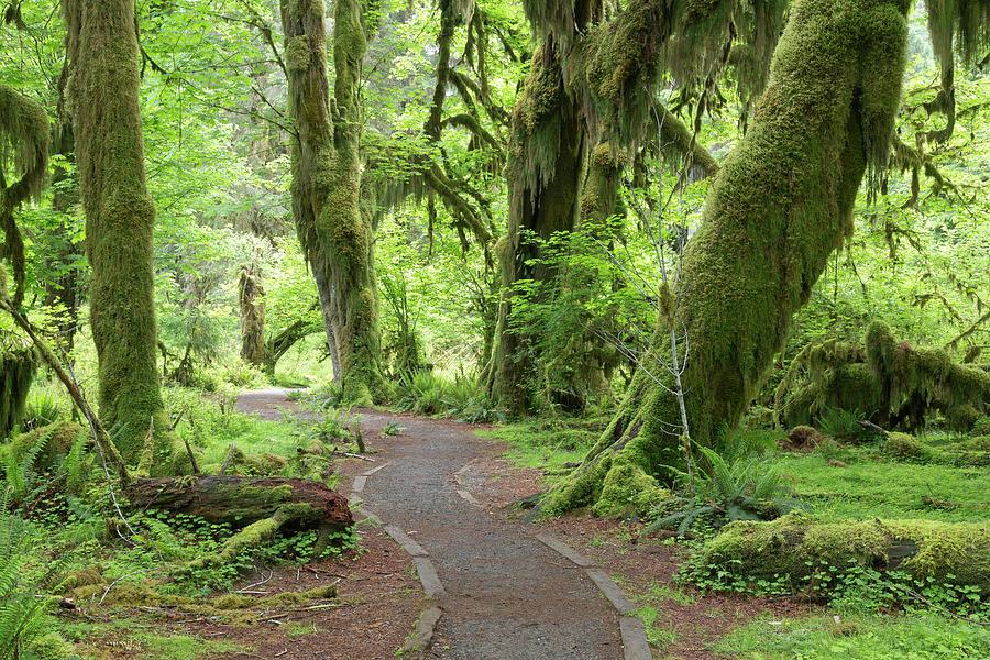 Green Photograph - Usa, Washington, Olympic National Park by Jaynes Gallery