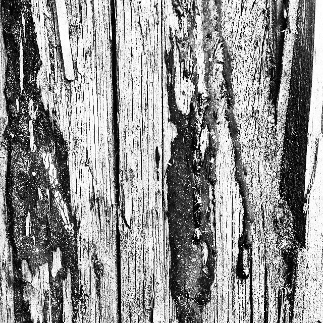 Beautiful Photograph - Wooden Post B n W 2 by J Love