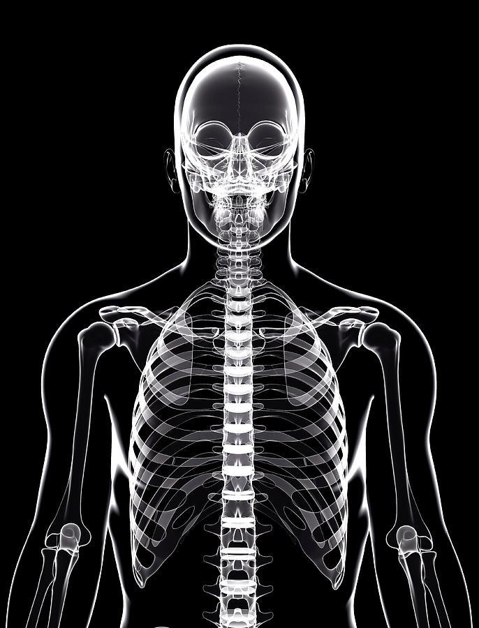 Artwork Photograph - Human Skeleton by Pixologicstudio/science Photo Library