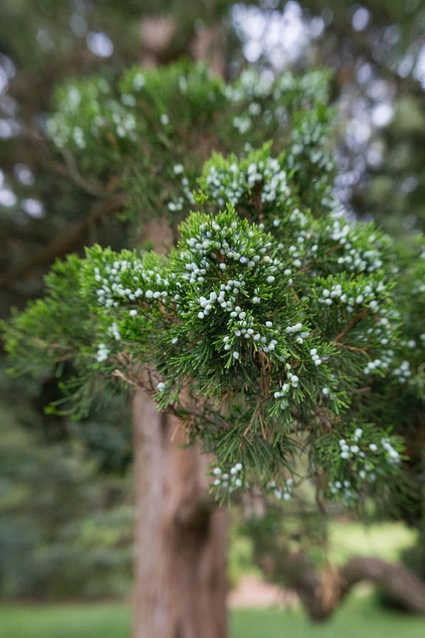 Conifer Photograph - 3d Confier by Kimberly Ayars