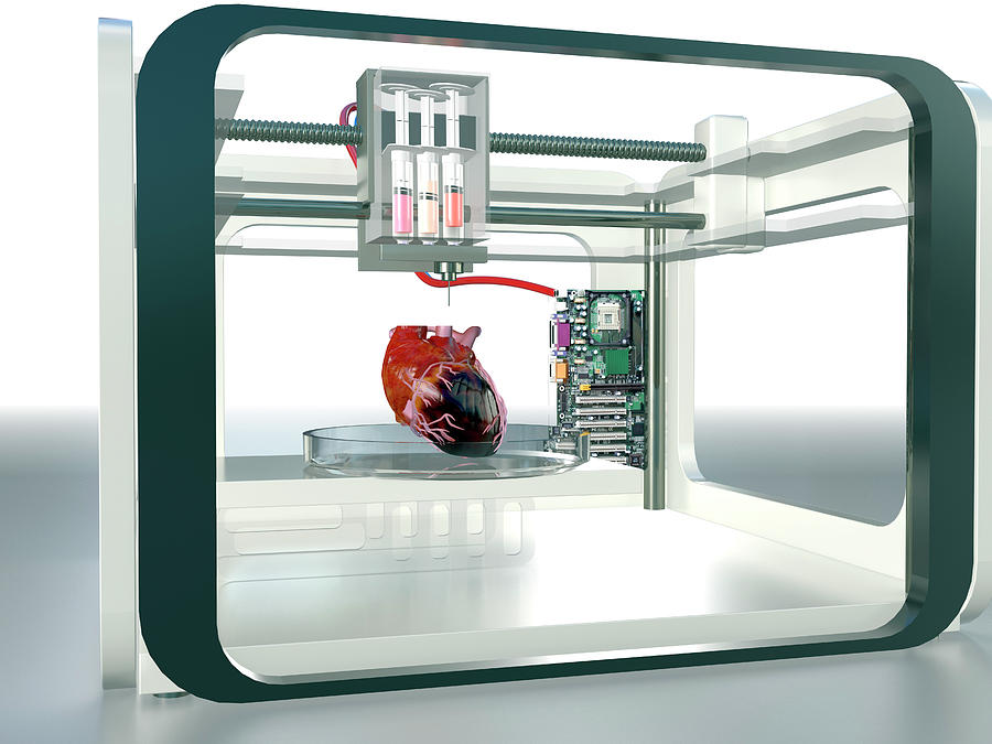 21st Century Photograph - 3d Printed Heart by Christian Darkin