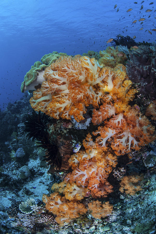A Beautiful Cluster Of Soft Coral Photograph
