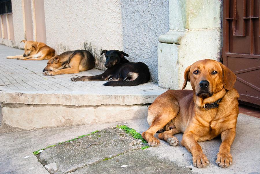 4 Amigos Photograph by Pedro Nunez