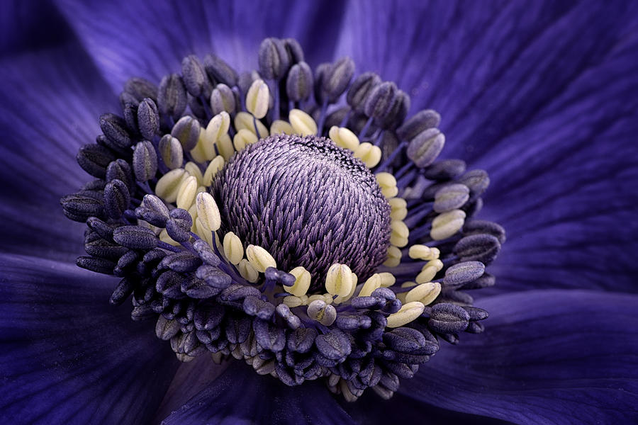 Anemone Photograph - Anemone by Mark Johnson