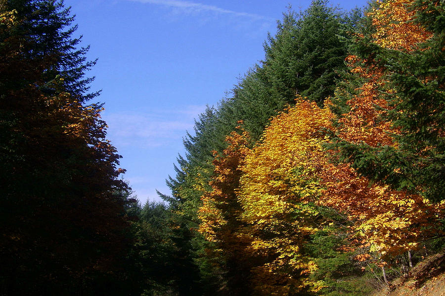 Bloom Photograph - Autumn 9 by J D Owen