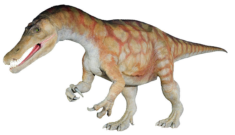 White Background Photograph - Baryonyx Dinosaur Model by Natural History Museum, London/science Photo Library