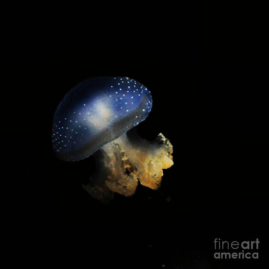 Boston Aquarium Photograph by Samantha Baker