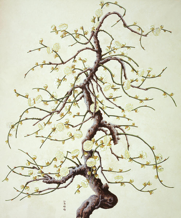 Angiosperm Photograph - Botanical Illustration by Natural History Museum, London/science Photo Library
