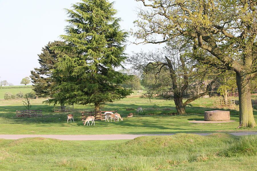 Deer Photograph - Bradgate Park by Mark Severn