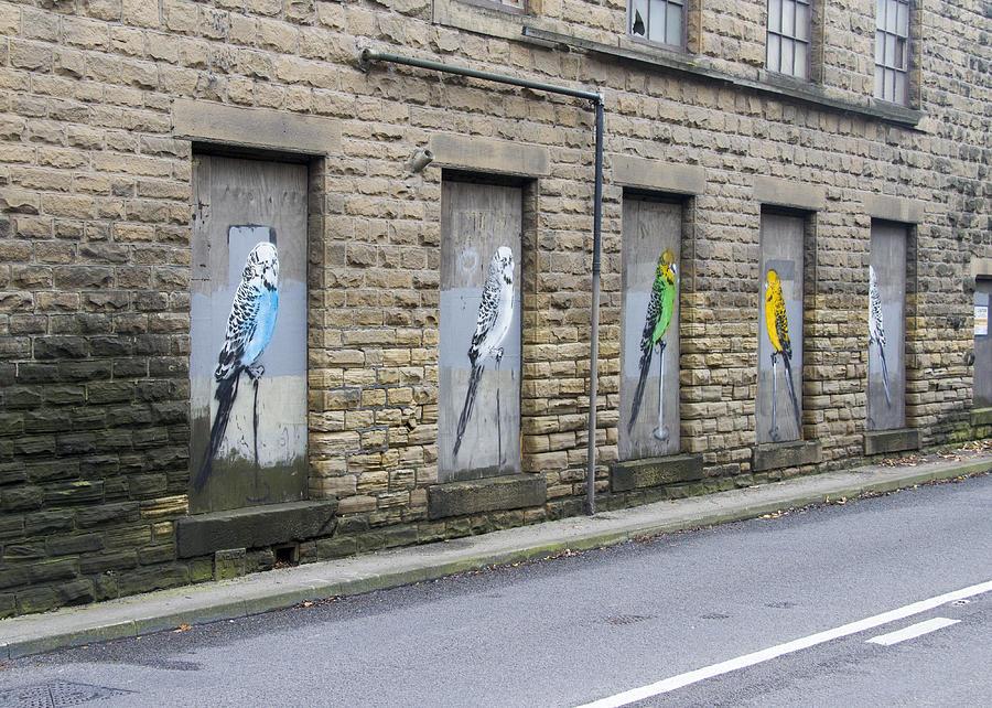 Budgie Graffiti Photograph