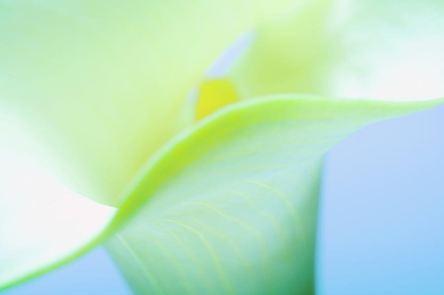 Horizontal Photograph - Close-up Of A Calla Lily Flower by Panoramic Images