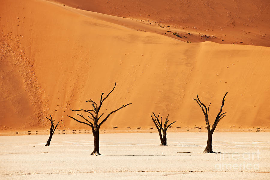 Namibia Photograph - Dead Vlei In Namib Desert by Juergen Ritterbach