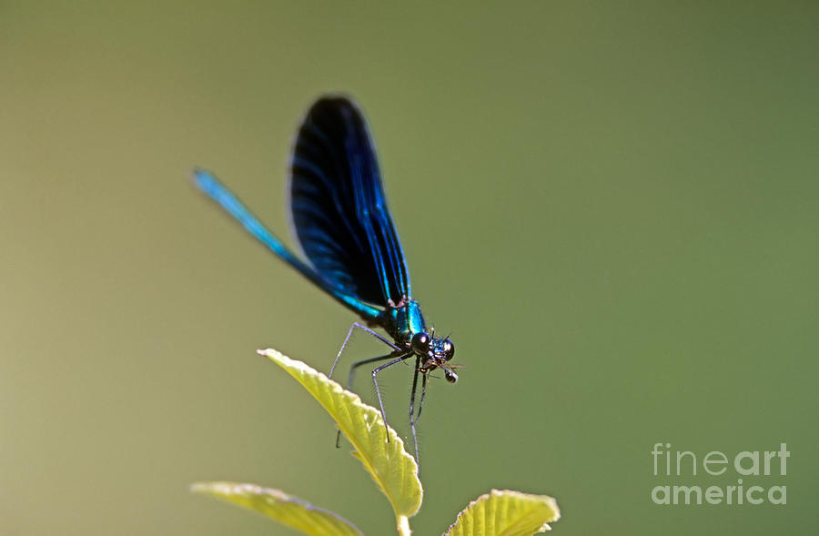 Dragonfly Photograph - Dragonfly by George Atsametakis
